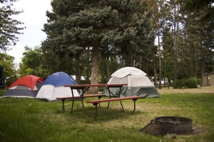 Tent Sites in the Trees