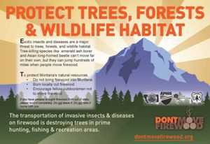 Moving firewood can be harmful to our trees